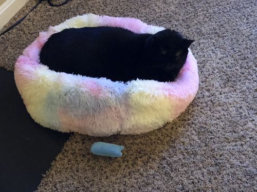 Marshmallow Cat Bed photo review