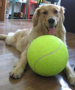 Giant Tennis Ball for Dogs 2